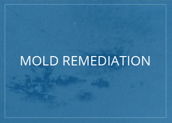 mold inspection and removal services in palm beach county