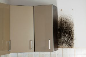 Boynton Beach Mold Specialist | A+ Mold Remediation