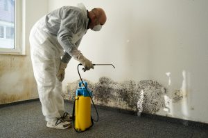 Lake Worth Professional Mold Removal | A+ Mold Remediation