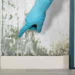 Looking For a South Florida Mold Remediation Service?