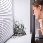 Discovering the Differences: Do I have Black Mold or Mildew?