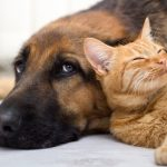 Protecting Your Furry Friends: The Effects of Mold on Your Pets