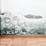 Identifying and Discussing Common Types of House Mold