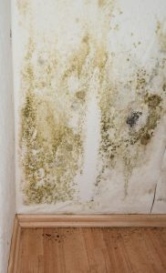 Pahokee Mold Remediation Specialist | A Plus Mold Remediation
