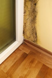 Wellington Mold Remediation | A+ Mold Remediation