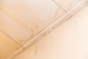 Palm Beach Mold Removal Service | A+ Mold Remediation