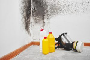 Palm Beach Gardens Black Mold Removal | A+ Mold Remediation