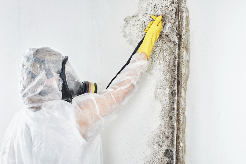 Saying Goodbye to Moldy Walls, Floors, and Carpets!