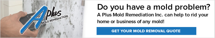 The Effects of Mold on the Structure of Your Home