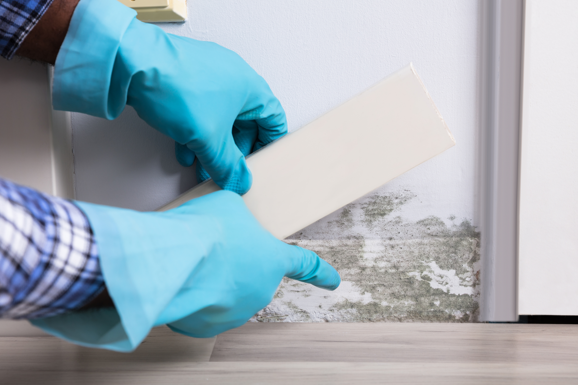Top Reasons to Consider a Home Mold Inspection