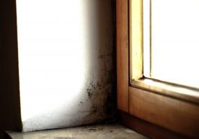 5 Mold Facts Every Homeowner Should Know