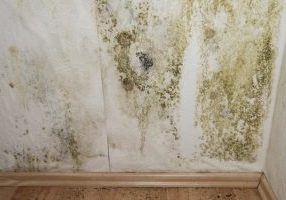 Need to Know How To Remove Mildew From Your Home?