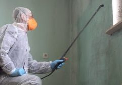 How to Detect Mold in Walls and What to do About It