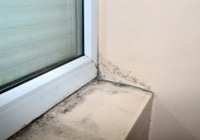 Some Signs of Mold Homeowners can Look out For
