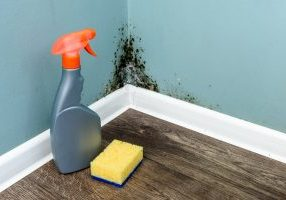 The Dangers of DIY Mold Removal