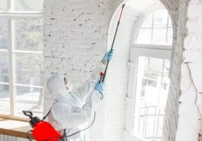 The Difference Between Mold Removal and Mold Remediation Services